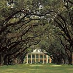 Oak Alley Plantation's Alley of Oaks
